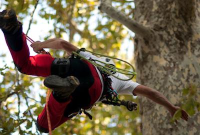 IMG_SITO_ tree-climbing